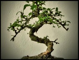 Bonsai by o0zaen0o