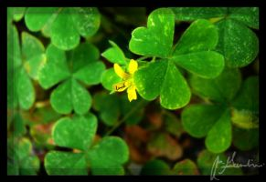 Luck by Kateri12