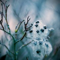 winter feeling by BlueFish24