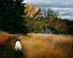 The Road Home by WayneBenedet