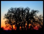 Torched By The Sky by FramedByNature