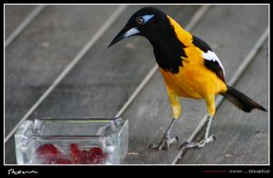 Yummy...breakfast by simoner
