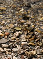 Rocks,Water,and Something by gravisher