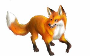 Collab : What does THIS FOX say by Marini4