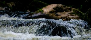 Swallow falls 8 by forgottenson1