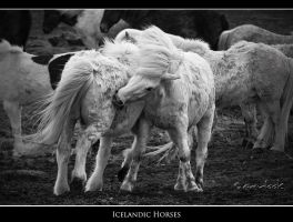 Icelandic Horses by marianne-lim