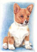 welsh corgi pembroke puppy by asbolos