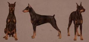 Doberman Studies by giselleukardi