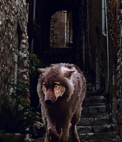 i walk a LONELY road by lupus-volaticus