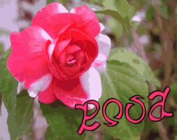 Rosa, ambigram by sixt0p