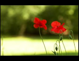 Flanders Fields by phoenix-69