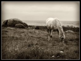 Horse black and white by kakobrutus