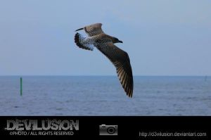 IMG_6192 by D3vilusion