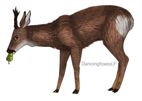 Roe Deer by DancingfoxesLF
