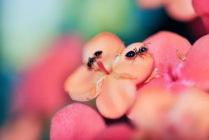 Macro Ants by bismad