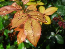 Raindrops on New Leaves by Adriellovesart