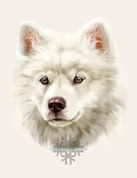 White pup by Marzzunny