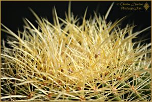 Golden Barrel Cactus by bast4cats