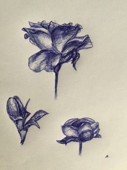 Flower Sketches by azul013