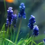 Blue Glow by AljoschaThielen