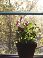 Flowers in the Window by cloudedjudgement