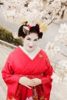 maiko makeover: under sakura tree by moonlightspirit