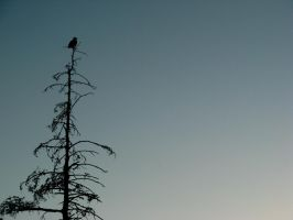 Eagle on a Pole 1 by phoxymoron