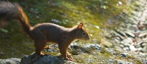 squirrel by mephisto23