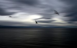 Clouds-Sea-Seagull by vabserk