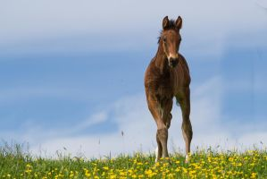 WB Foal Crossed Legs Frontal Stock by LuDa-Stock