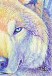 """""""Burning Cold"""" - ACEO by Goldenwolf"""