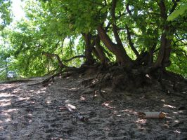 big roots tree 02 by doko-stock