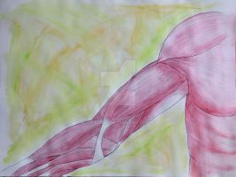 Muscles of the Arm by daxicut