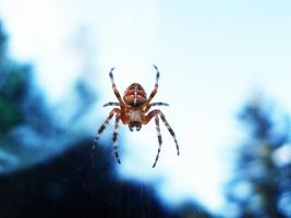 Itsy Bitsy Spider by leopard0825
