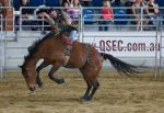 STOCK 2013 Rodeo-143 by fillyrox