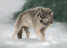 Grey Wolf by mat3w