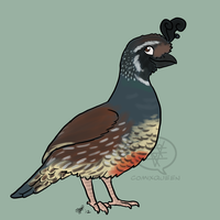 Barry the Quail by comixqueen