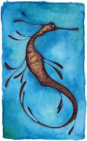 Weedy Sea Dragon by glass-candy