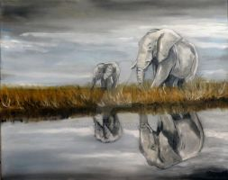Elephant Reflections by Schnellart