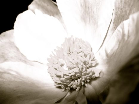 Colourless by luvBEX