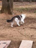 Another Cat by Niloa