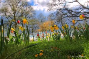 Entrance to the spring paradise by MT-Photografien