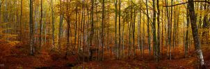 casentino forest by dfm63
