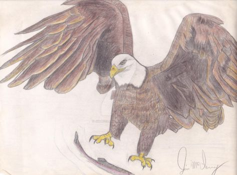 Colored Eagle  by jimmcclenny