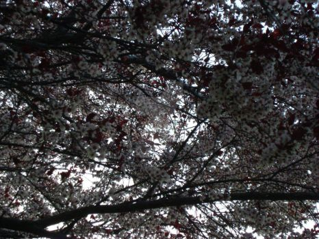 Canopy of Blooms by Serenity-Snow
