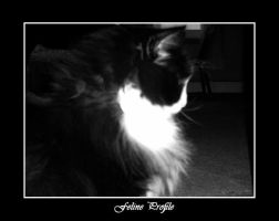 Feline Profile by Amarisa