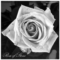 Rose of Stone by Lilywen