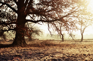 magic tree by MateuszPisarski