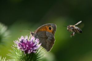 butterfly and others 7 by pejubo