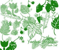 Yanagi Organic Brushes by yanagi-san